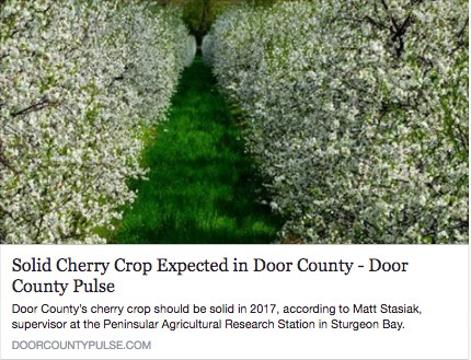 Solid Cherry Crop Expected in Door County - Door County Pulse