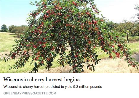 Wisconsin Cherry Harvest Begins